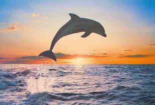 dauphins IMAG0035